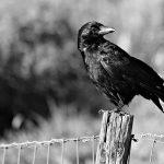 pássaros altamente sensíveis
